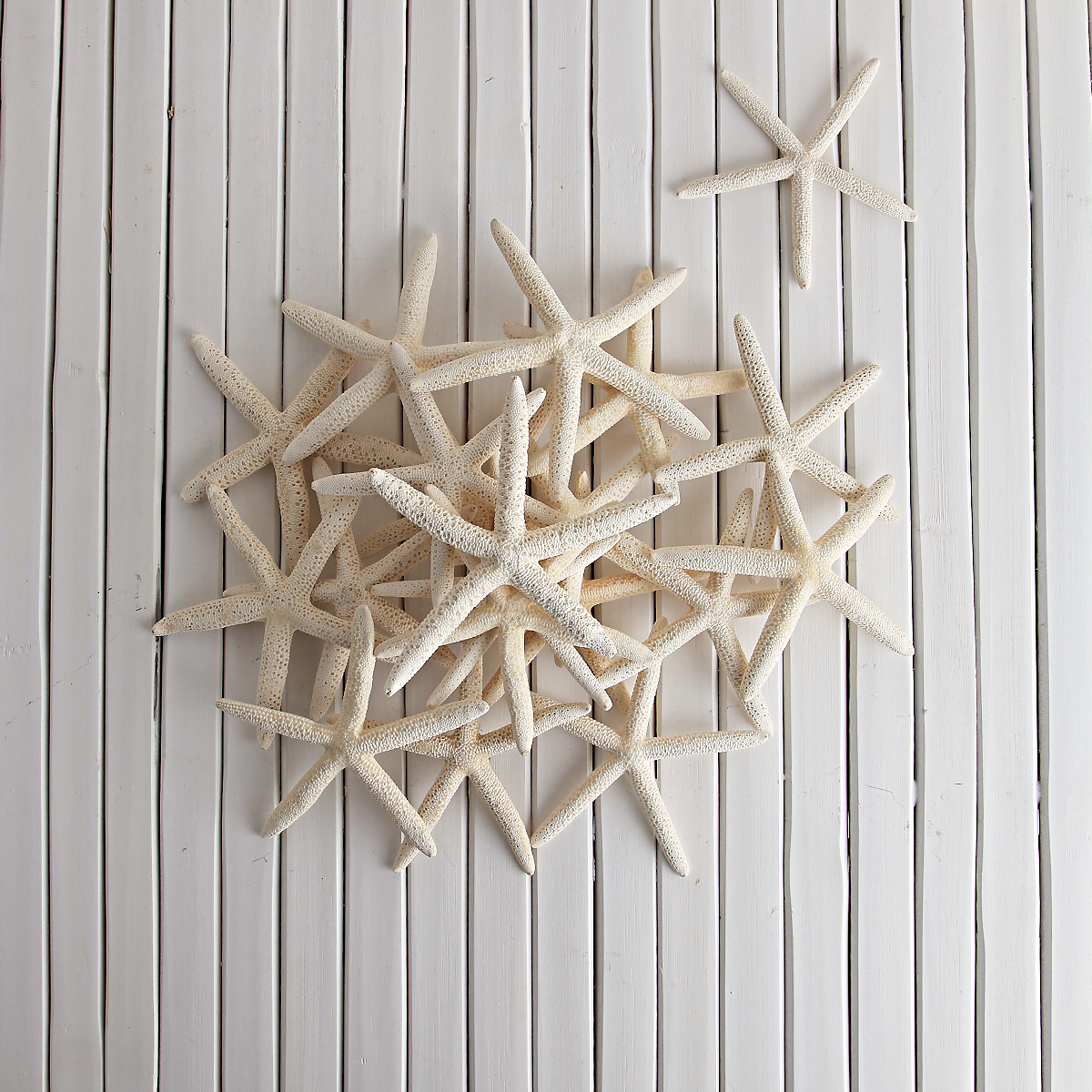 GIANT WHITE STARFISH - PACK OF 24