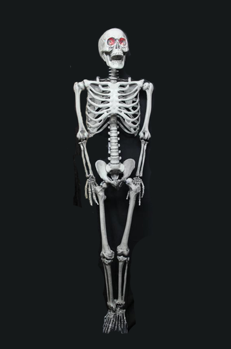 REALISTIC LIFESIZE FREDDIE THE SKELETON WITH LIGHT UP EYES