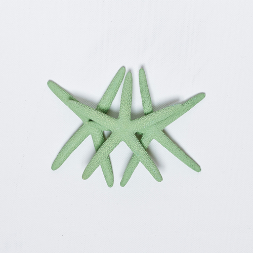 STARFISH LARGE MINT GREEN - PACK OF 24