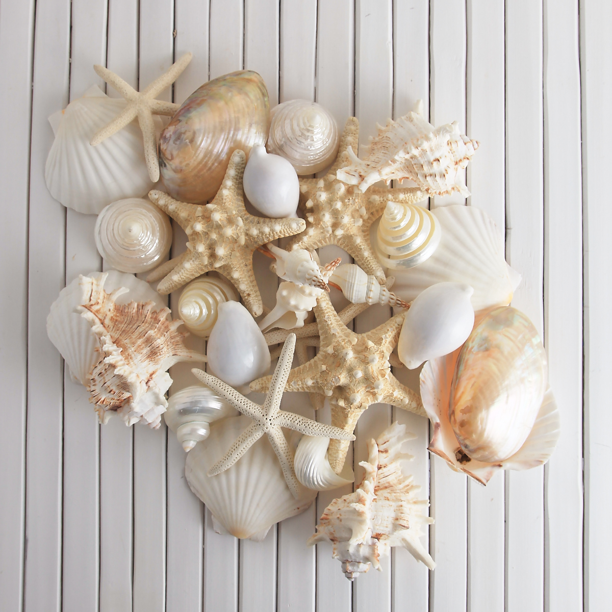 MIXED LARGE SHELLS 1.1 KILO BULK PACK - SUPER SPECIAL