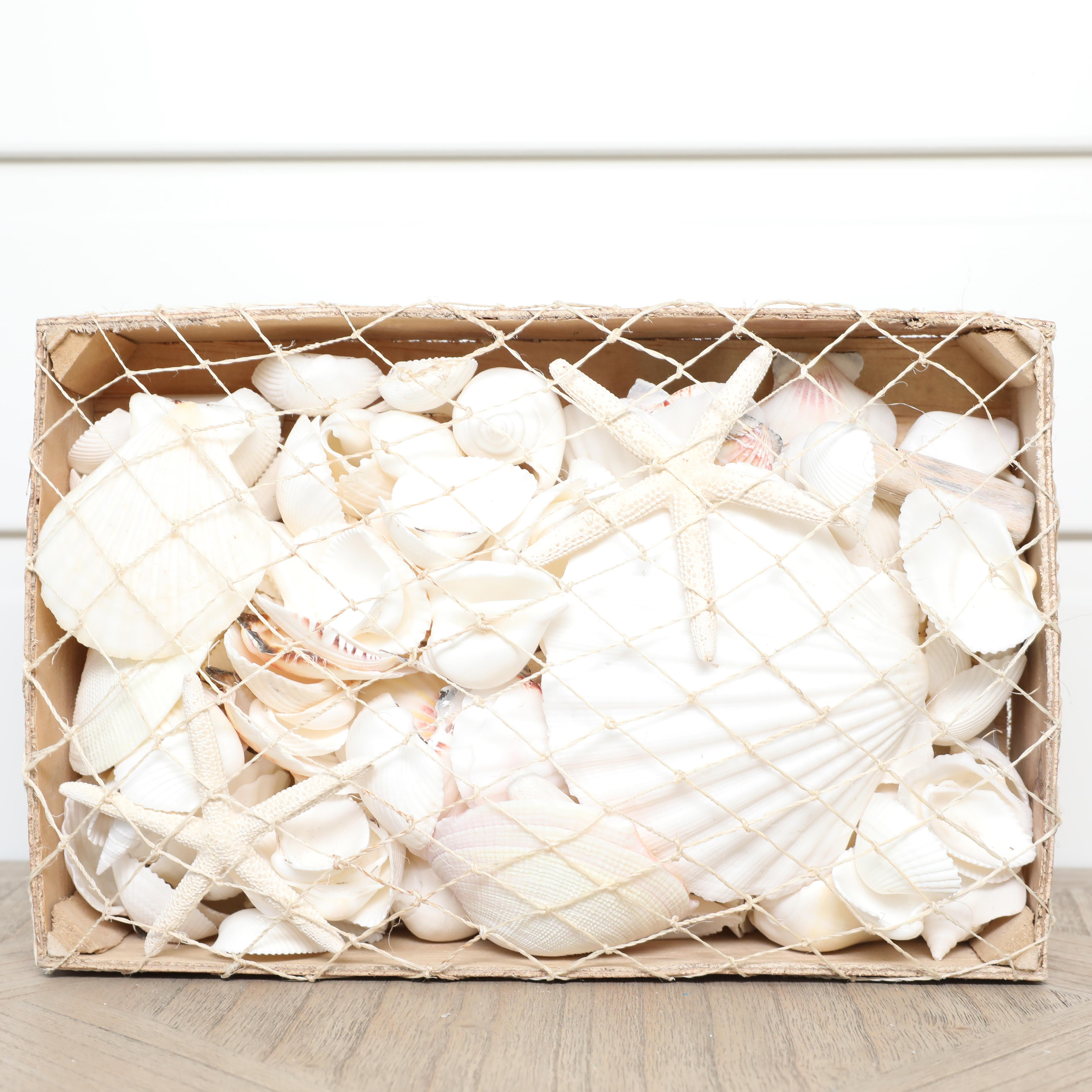 MIXED WHITE SHELLS & STARFISH IN A BOX
