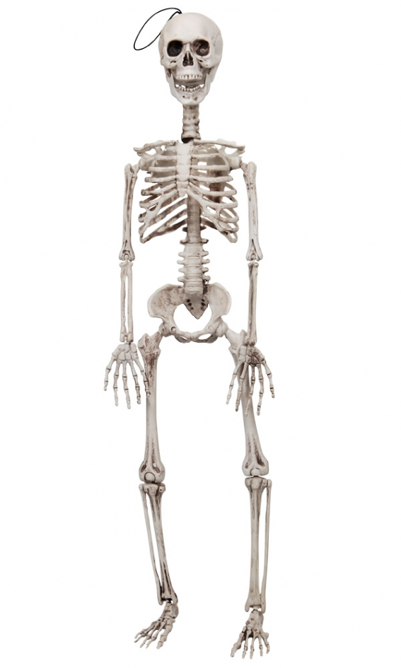 REALISTIC POSABLE 90CM SKELETON