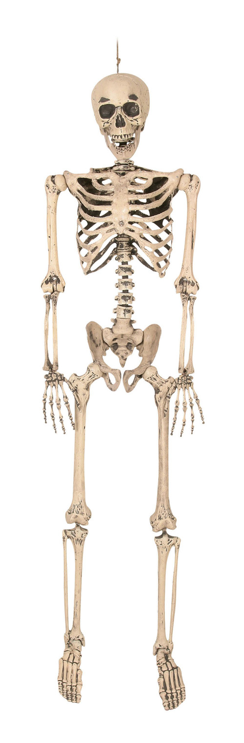 REALISTIC POSABLE 1.6M SKELETON