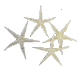 STARFISH - 3 INCHES IN A PACK OF 10
