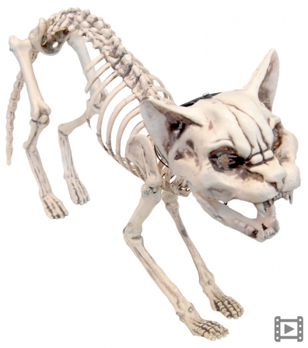 SKELETON MEOWING CAT WITH LIGHT UP EYES
