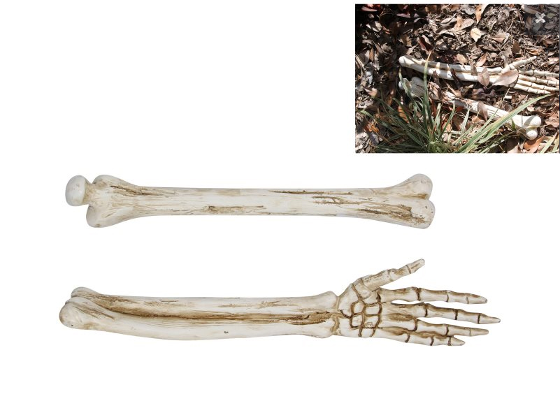SKELETON LIFE SIZE REALISTIC LOOKING ARM BONES - SET OF 2