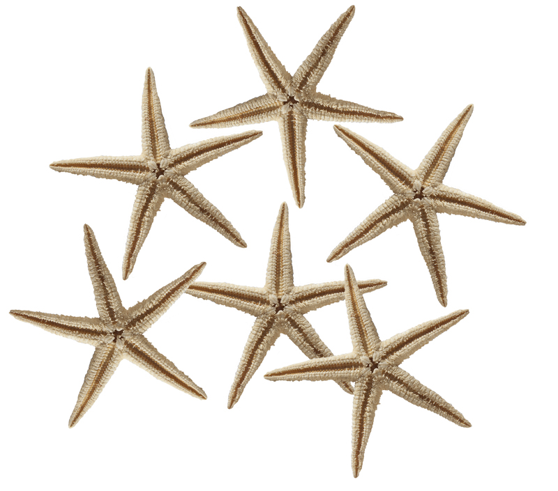 STARFISH - 2.5 - 3 INCHES - PACK OF 100