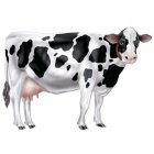 DAIRY COW CUTOUT - JOINTED